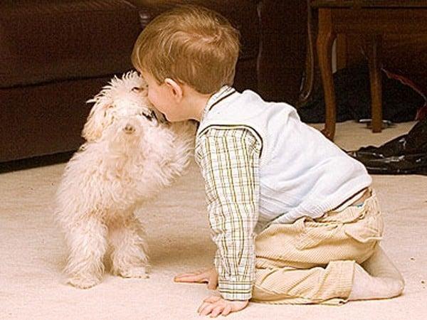 Cani per bambini piccoli e neonati - barboncino