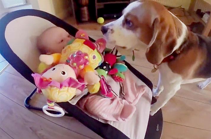 Cani per bambini piccoli e neonati - beagle