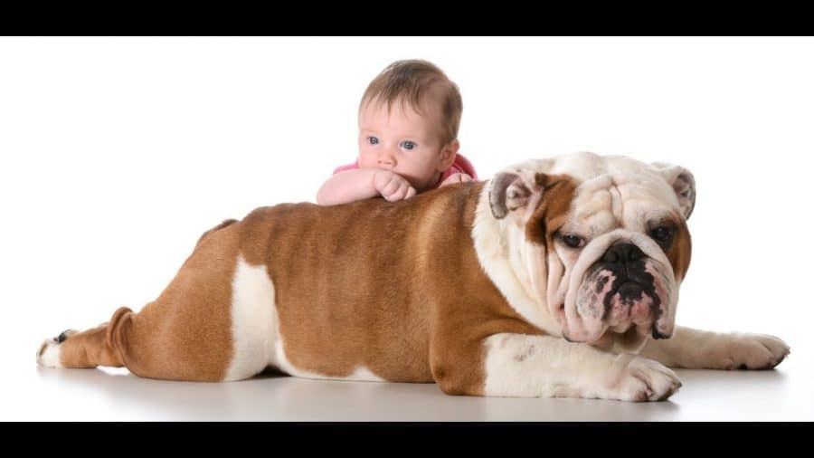 Cani per bambini piccoli e neonati - bulldog
