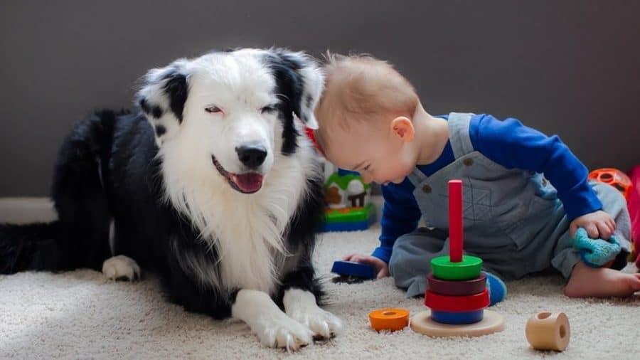 Cani per bambini piccoli e neonati - collie