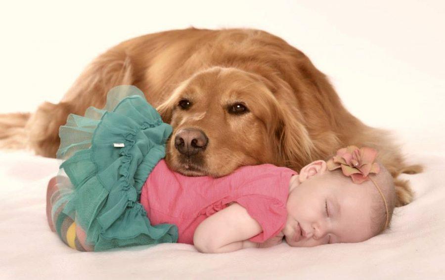 Cani per bambini piccoli e neonati - golden retriever