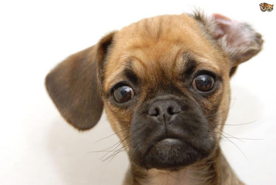 Cani per bambini piccoli e neonati - incrocio