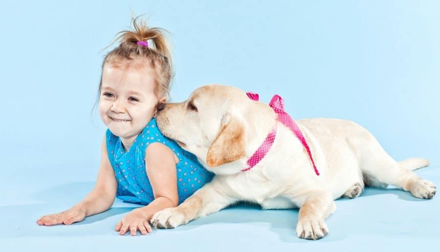 Cani per bambini piccoli e neonati - labrador