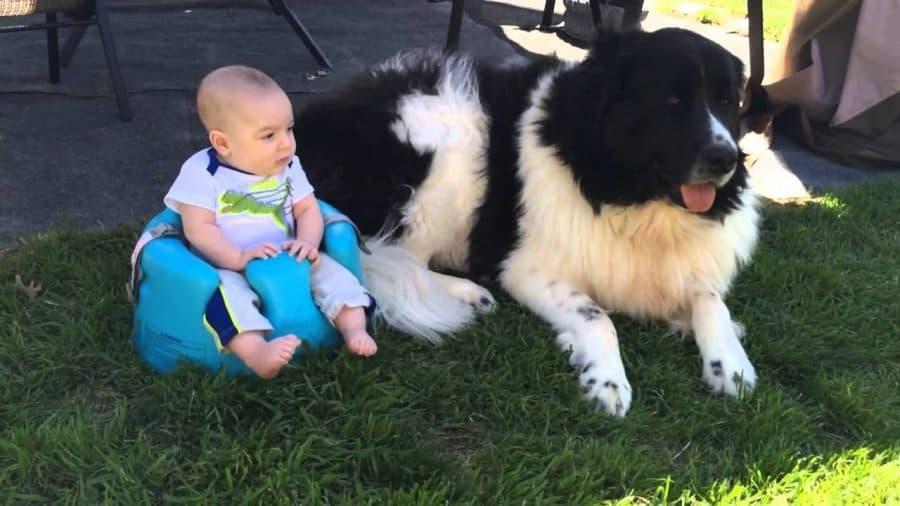 Cani per bambini piccoli e neonati - terranova